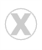 Big Cats: A Portrait Of The Cat Family