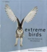 Extreme Birds,From The Fastest To The Smartest