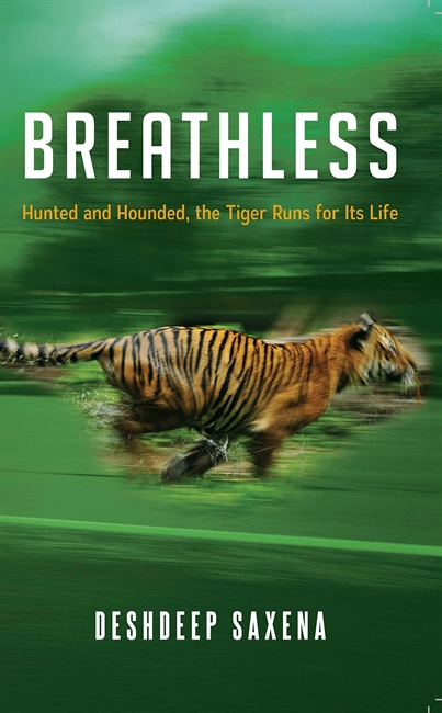 Breathless : Hunted and Hounded, the Tiger Runs for its Life